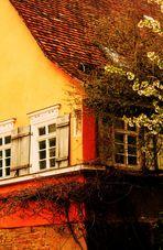 das bewachsene alte Haus im Frühling