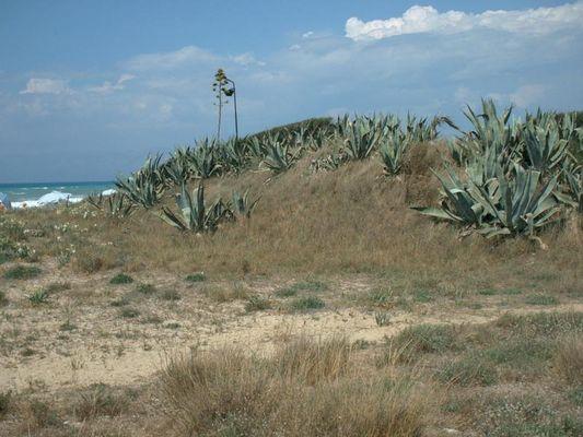 Das Bild habe ich im norden Korfus aufgenommen