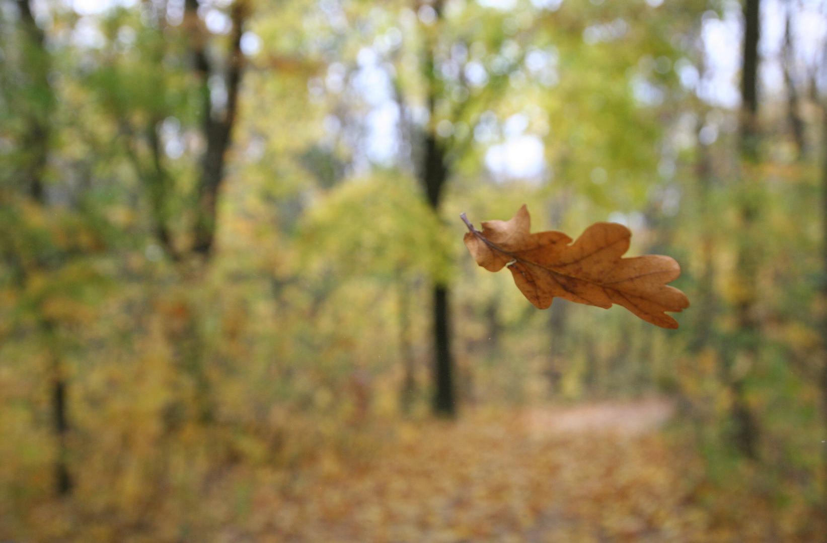 Das Blatt - Hallo Herbst