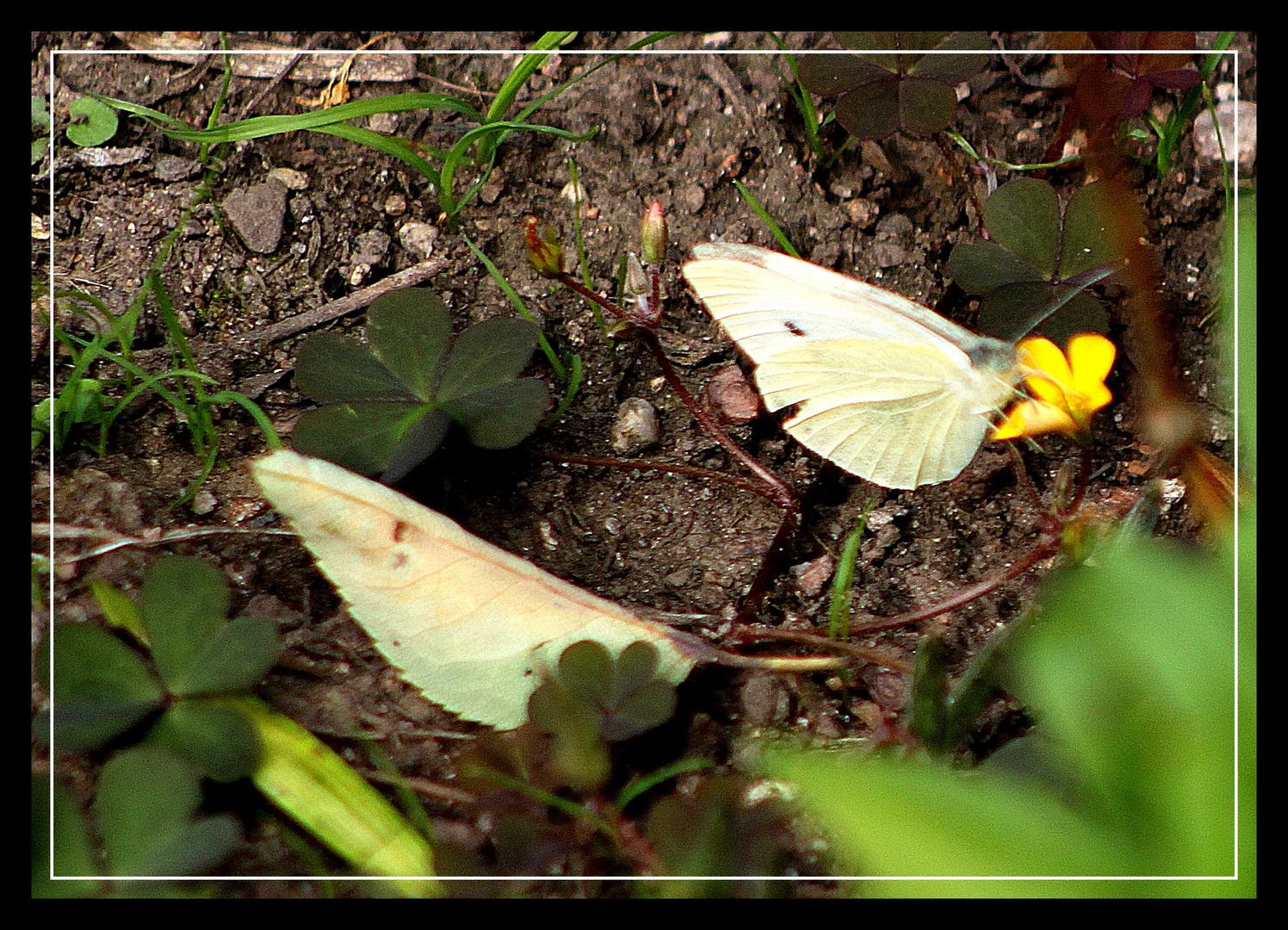 Das Blatt und der Schmetterling