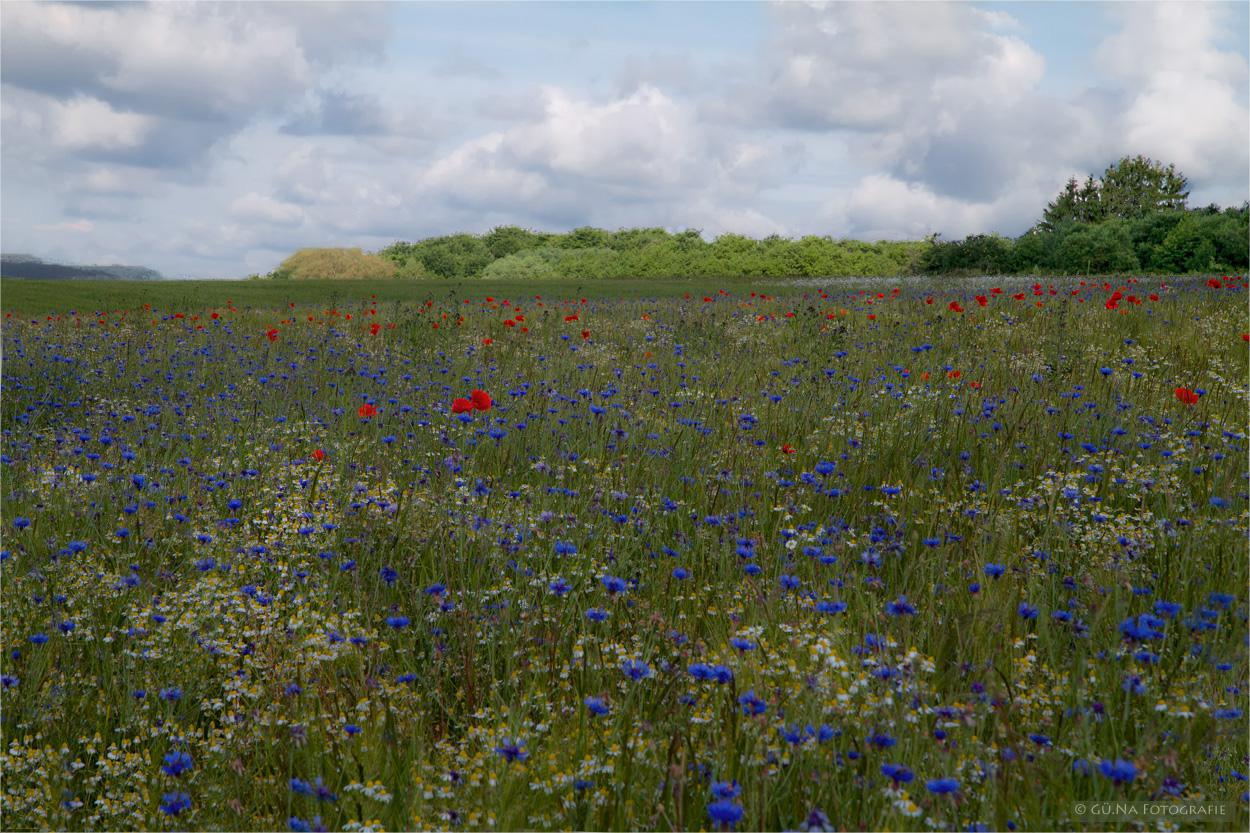 Das blau-weiß-rote Feld