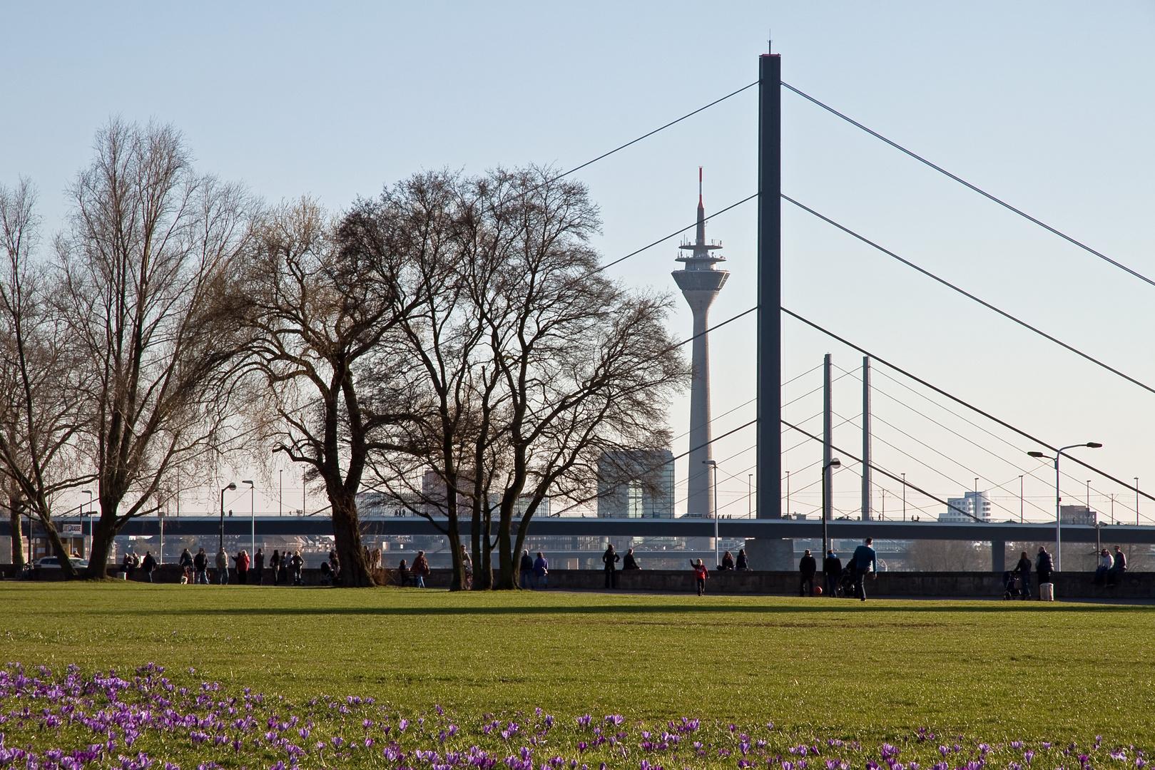 Das Blaue Band am Rhein dieses Frühjahr