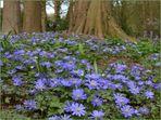 ... das blaue Band des Frühlings ...