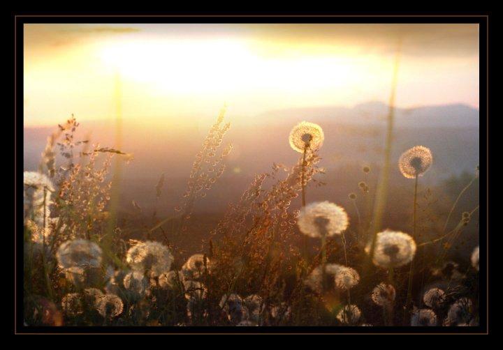 Das Blühen...