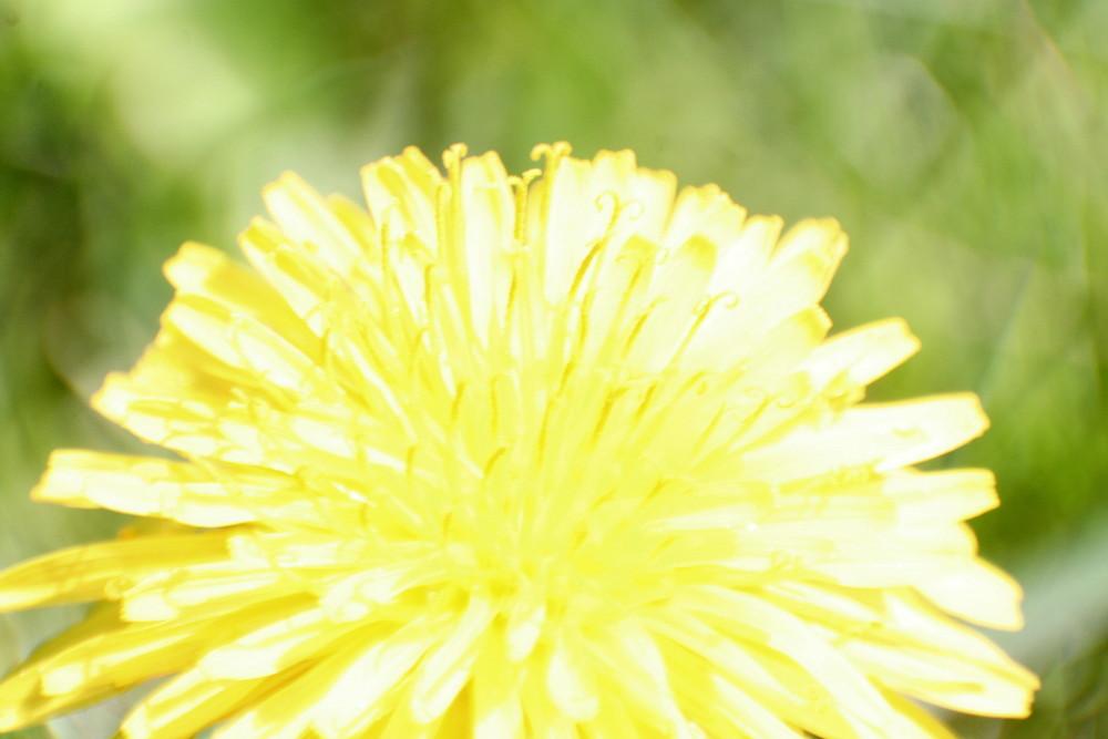 Das Blütenhighlight