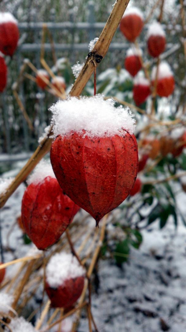 Das Blumen-Schneehäupchen