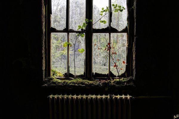 Das Blumenfenster....
