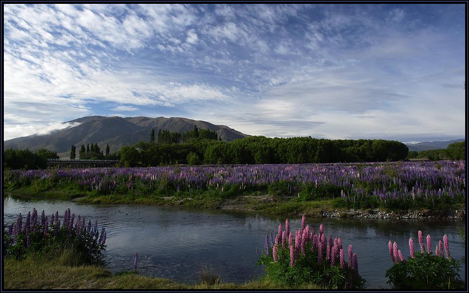 Das Blumenmeer