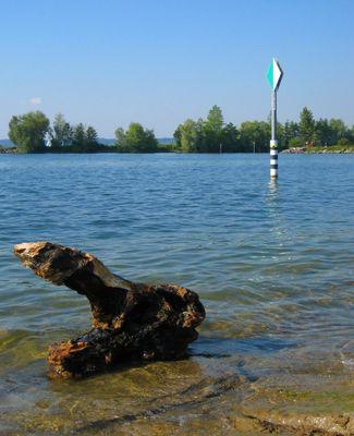 Das Bodensee-Krokodil