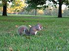 Das Butterknoten-Hörnchen