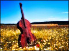 Das Cello in der Blumenwiese - Le violoncelle dans la prairie fleurie