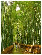 Das Dach aus Bambus - Hain am Tenryuji in Kyoto