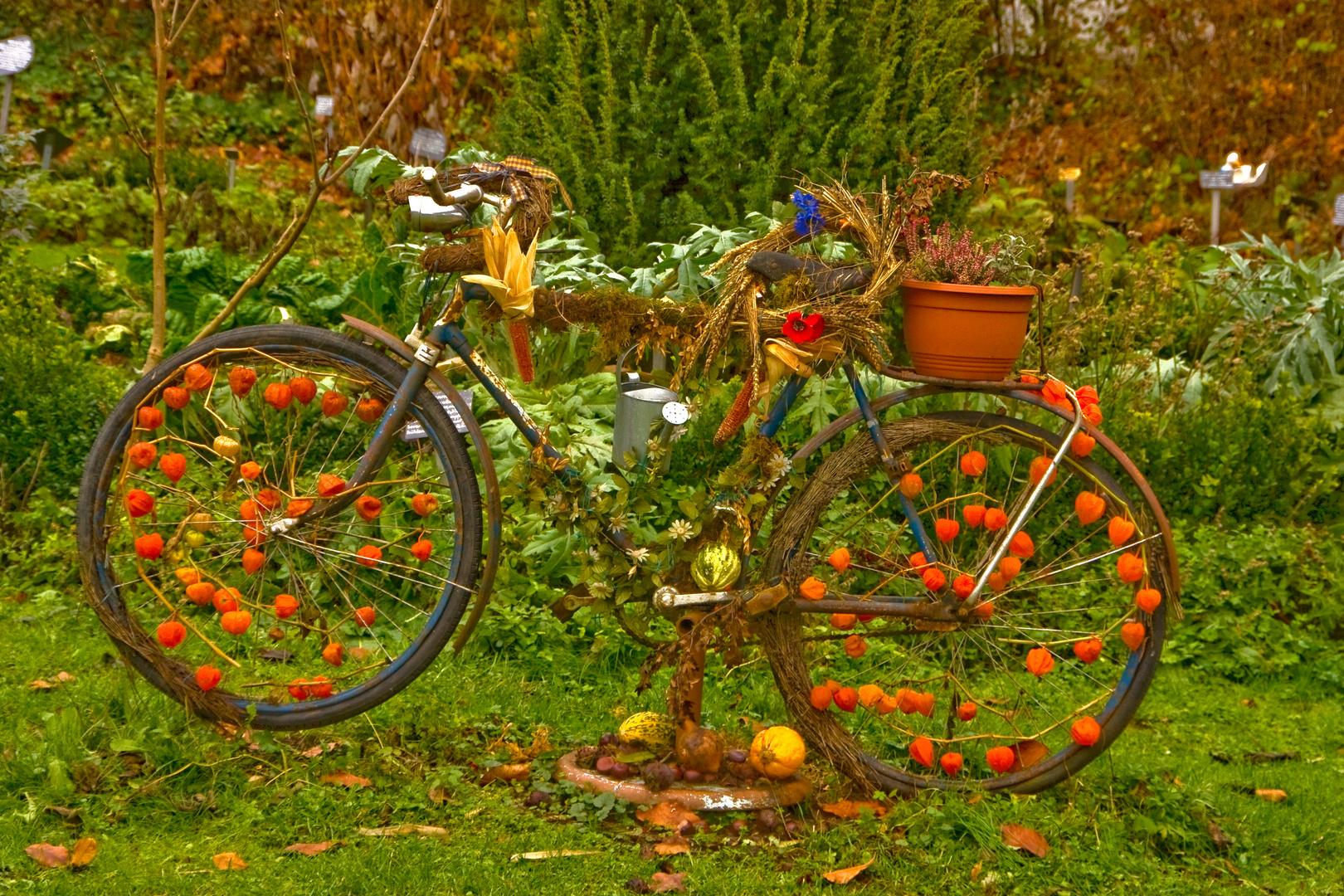 das deko fahrrad am kr utergarten ist herbstlich dekoriert foto bild pflanzen pilze. Black Bedroom Furniture Sets. Home Design Ideas