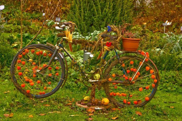 Das Deko-Fahrrad am Kräutergarten ist herbstlich dekoriert -