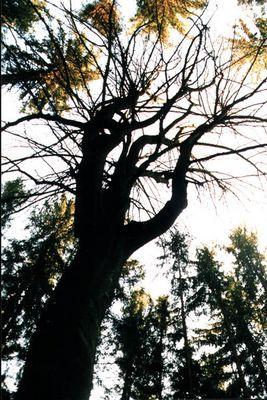 Das Dunkle im Wald