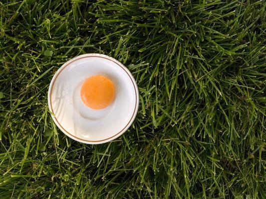 Das Ei.