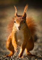 Das Eichhörnchen für Annette Schlauch