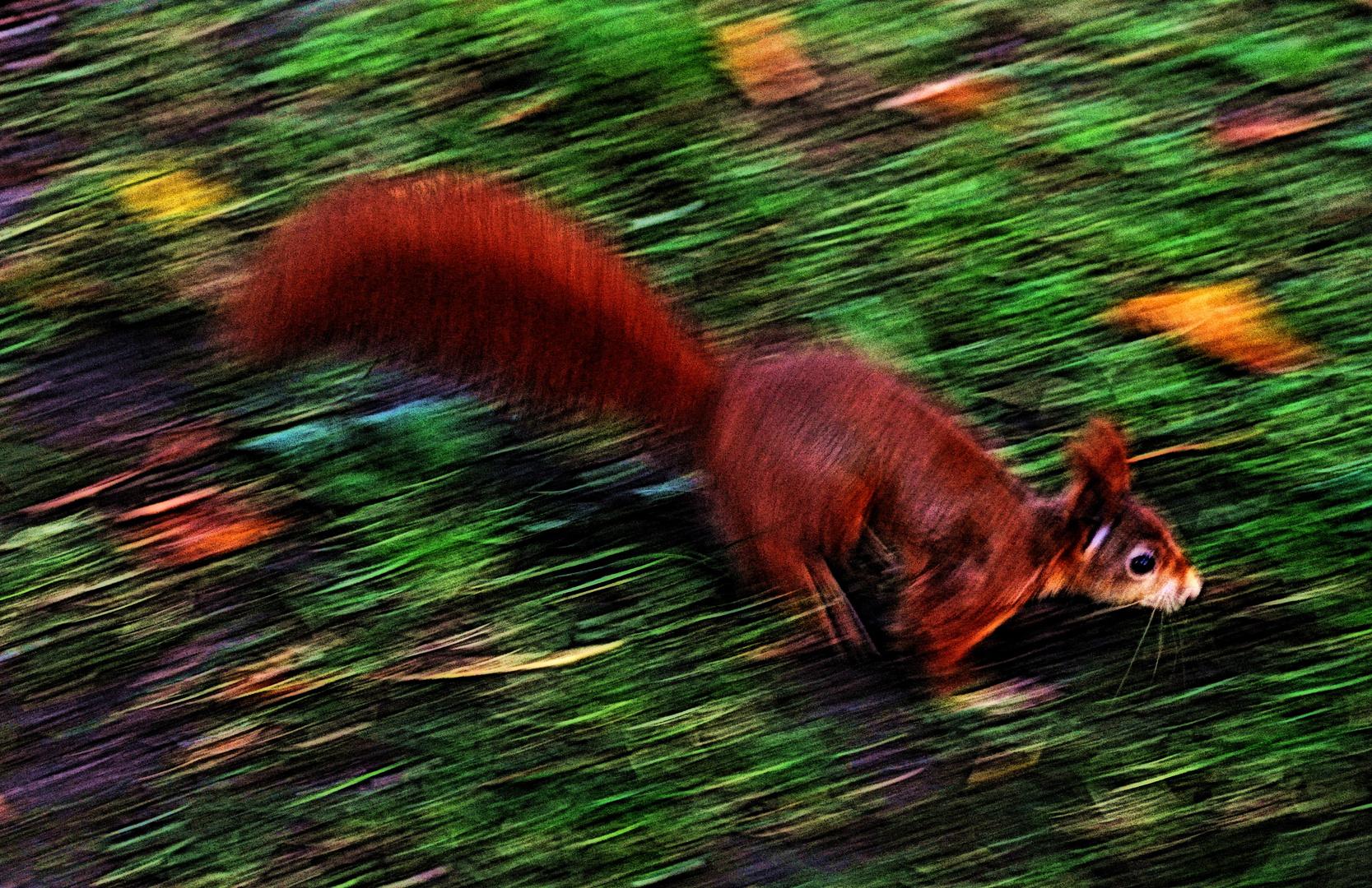 Das Eichhörnchen im Herbst
