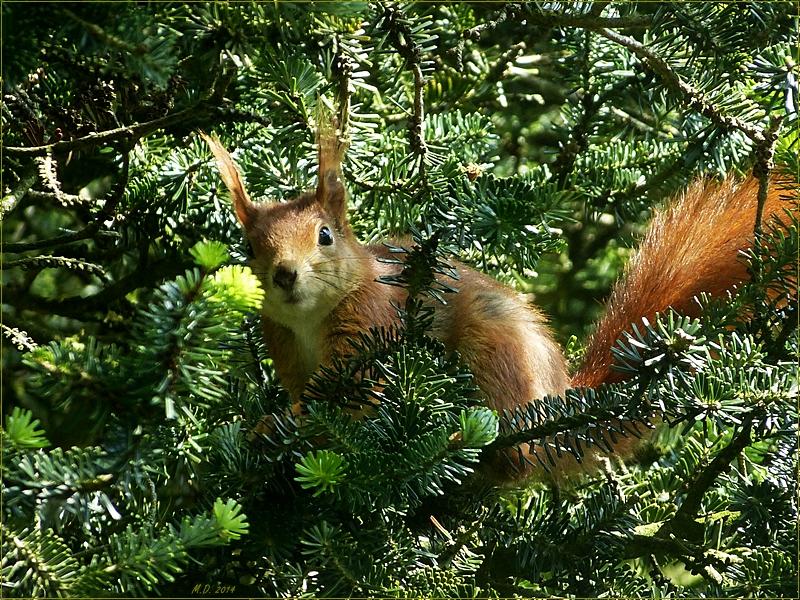 Das Eichhörnchen war genauso erstaunt,wie ich,als ich es entdeckte...
