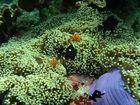 Das Eigenheim von Nemo