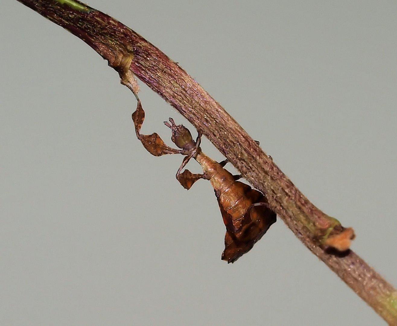 Das ein oder andere Blatt hängt doch noch am Baum...
