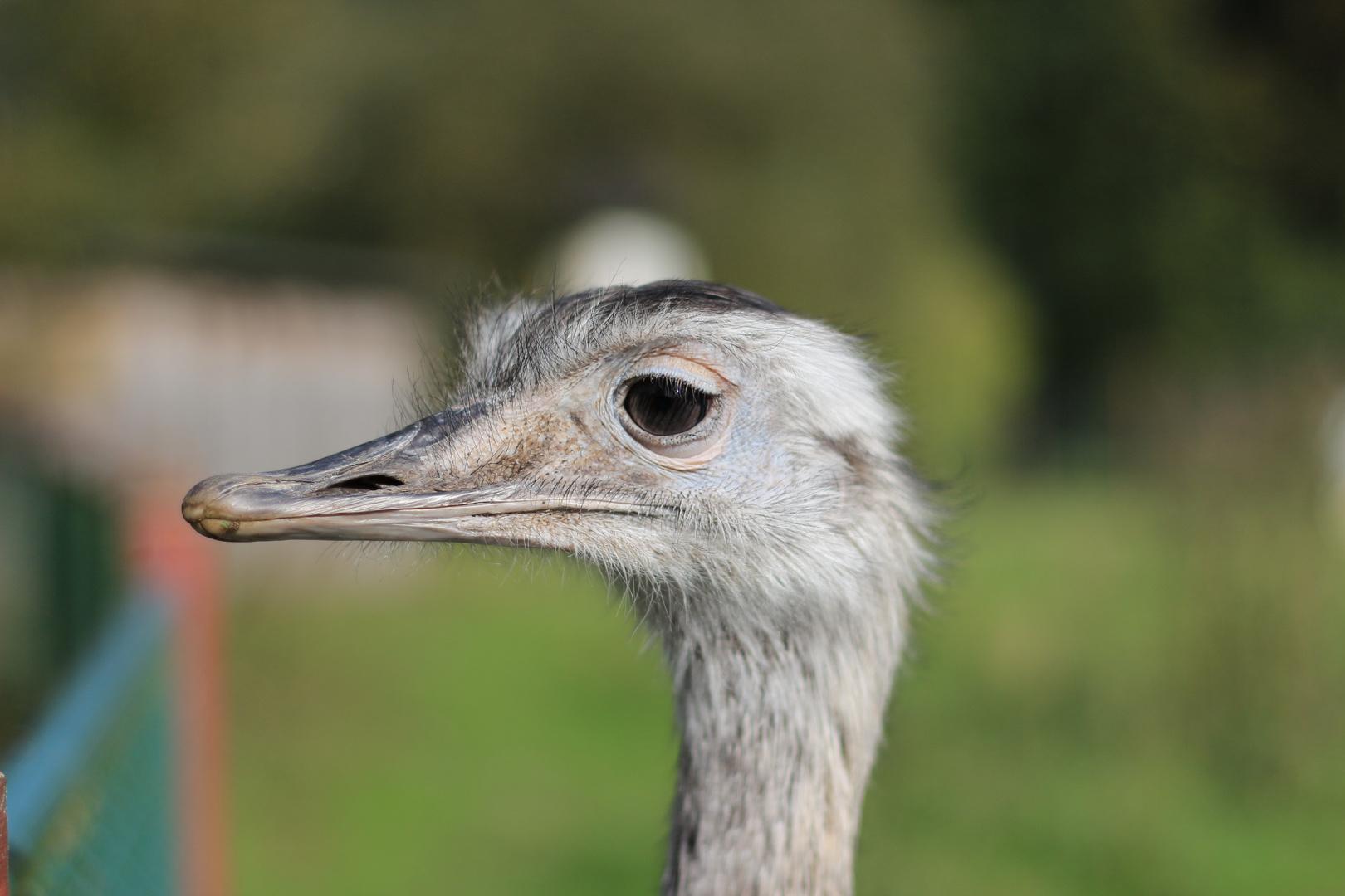 Das EMU