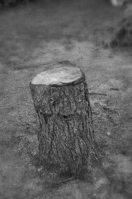 Das Ende eines Baumes... ?!?[K]