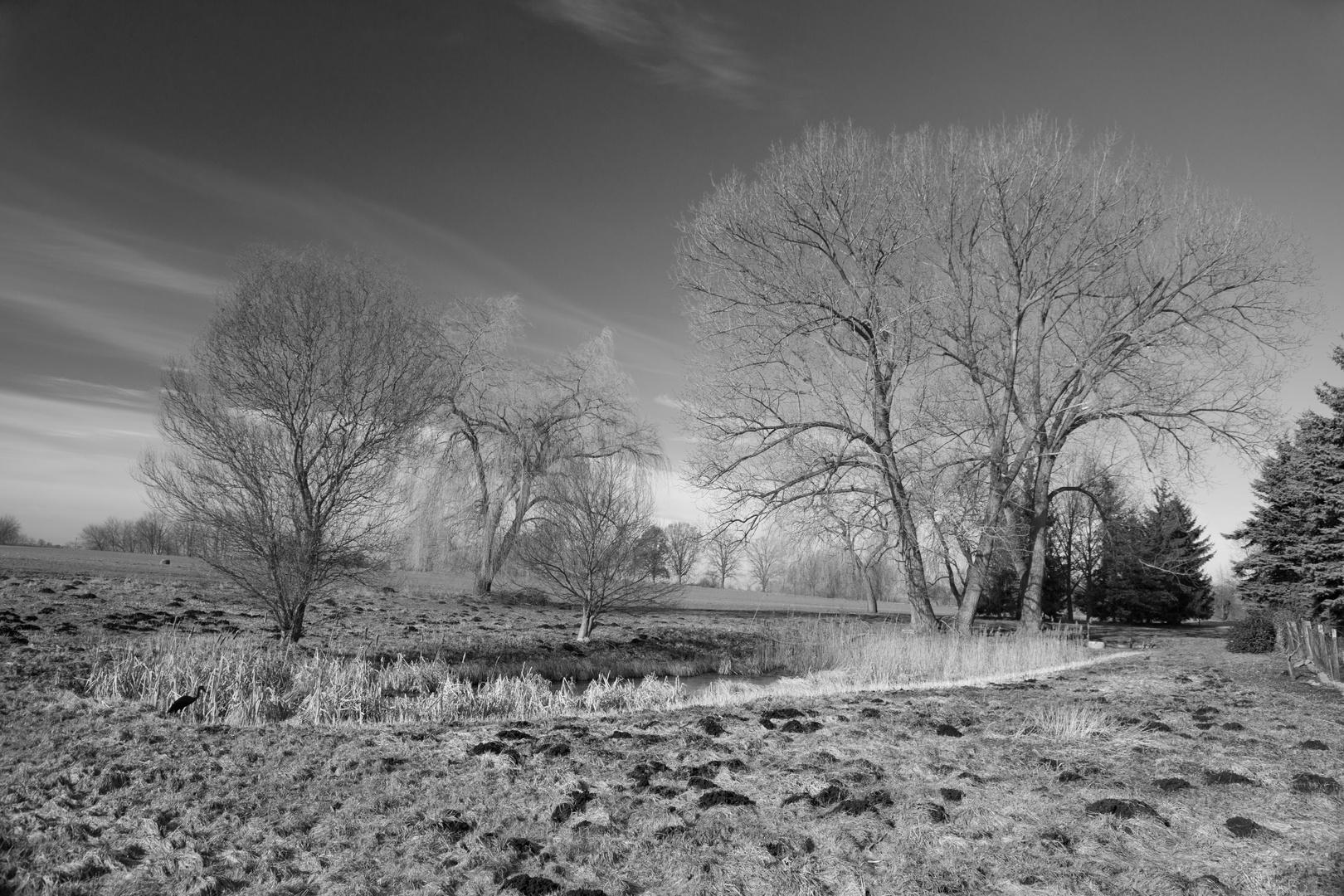 Das erste Frühlingslicht am Teich II