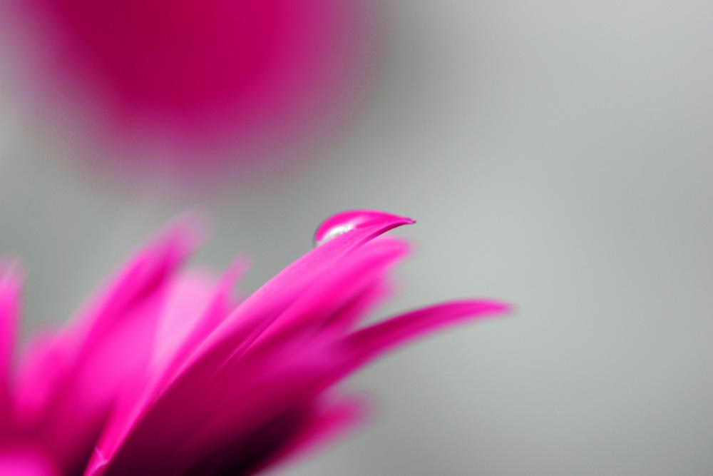 Das etwas andere Blüten Bild