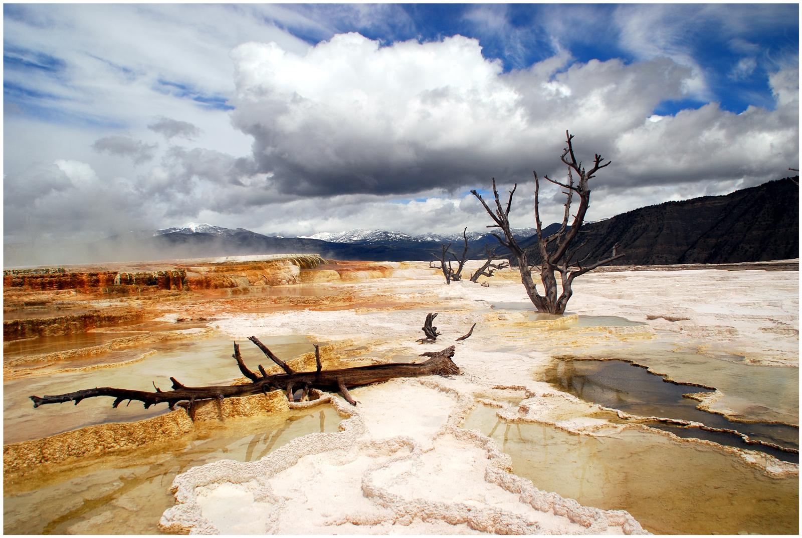 das etwas andere Dead Vlei - Mammoth Hot Springs, Yellowstone