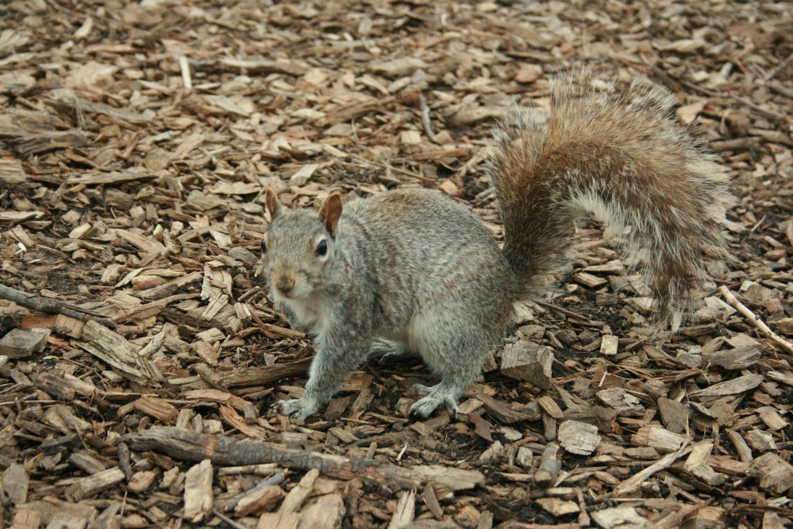 Das etwas andere Eichhörnchenbild