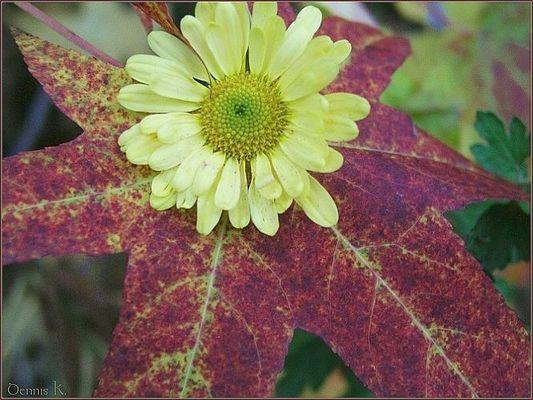 Das etwas andere Herbstblatt