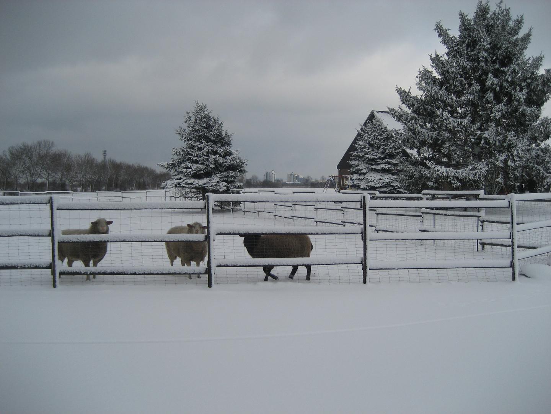 Das etwas andere Winterbild :)