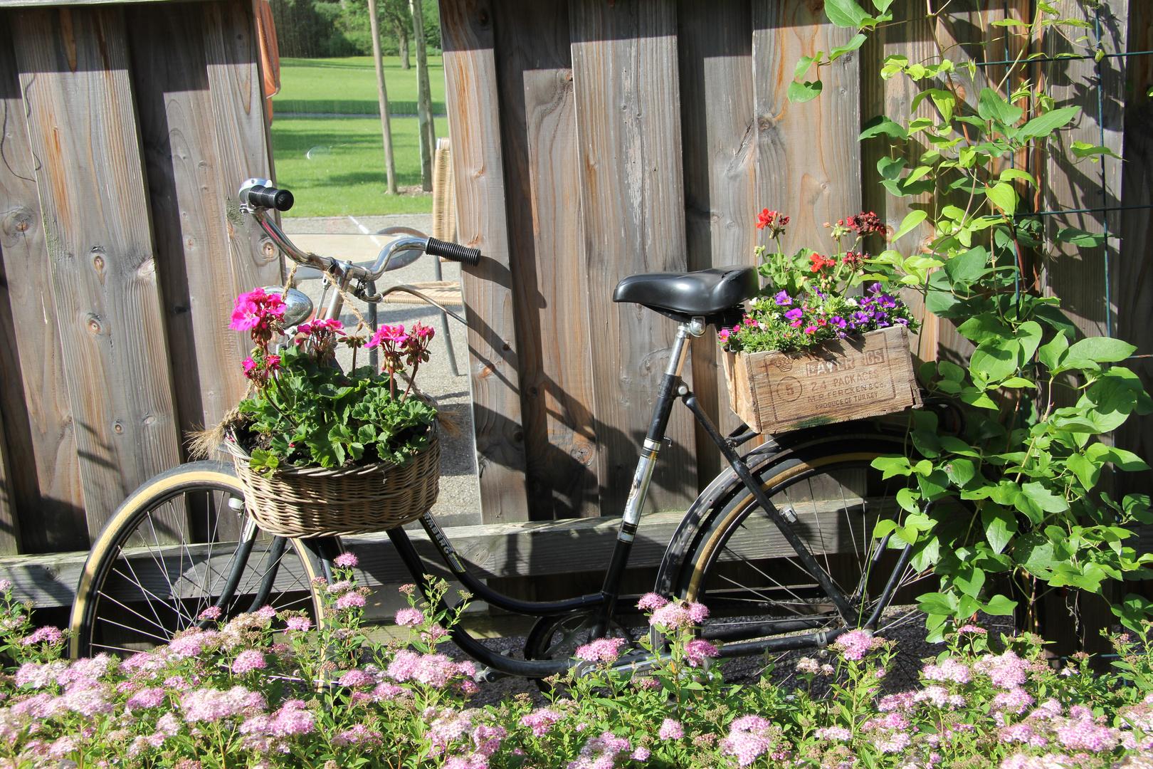 Das Fahrrad im Park