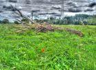 Das Feld im Glanz