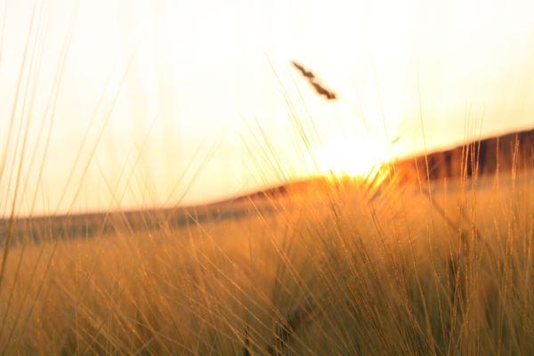 Das Feld in der Abendsonne