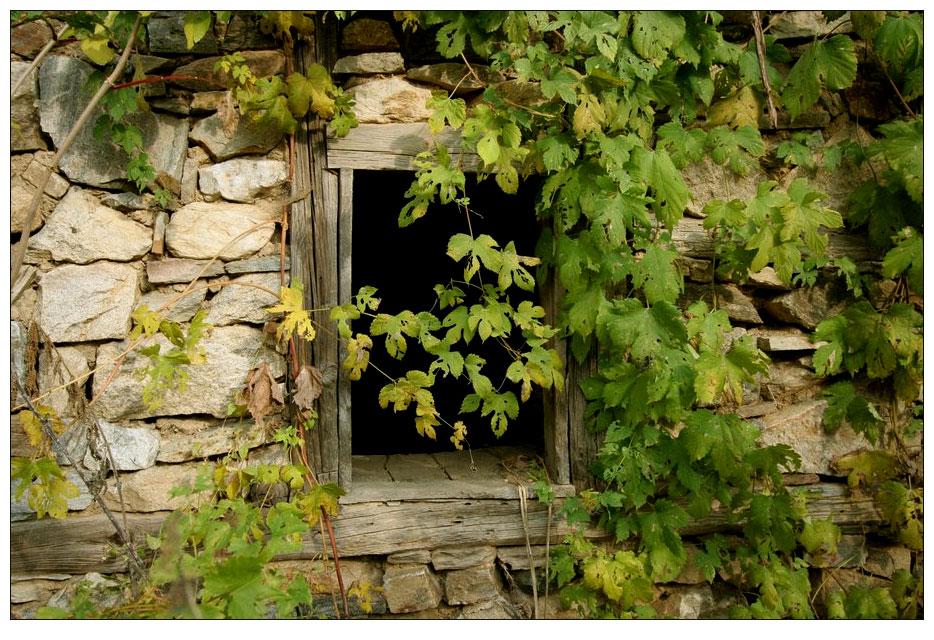 Das Fenster meines Hauses