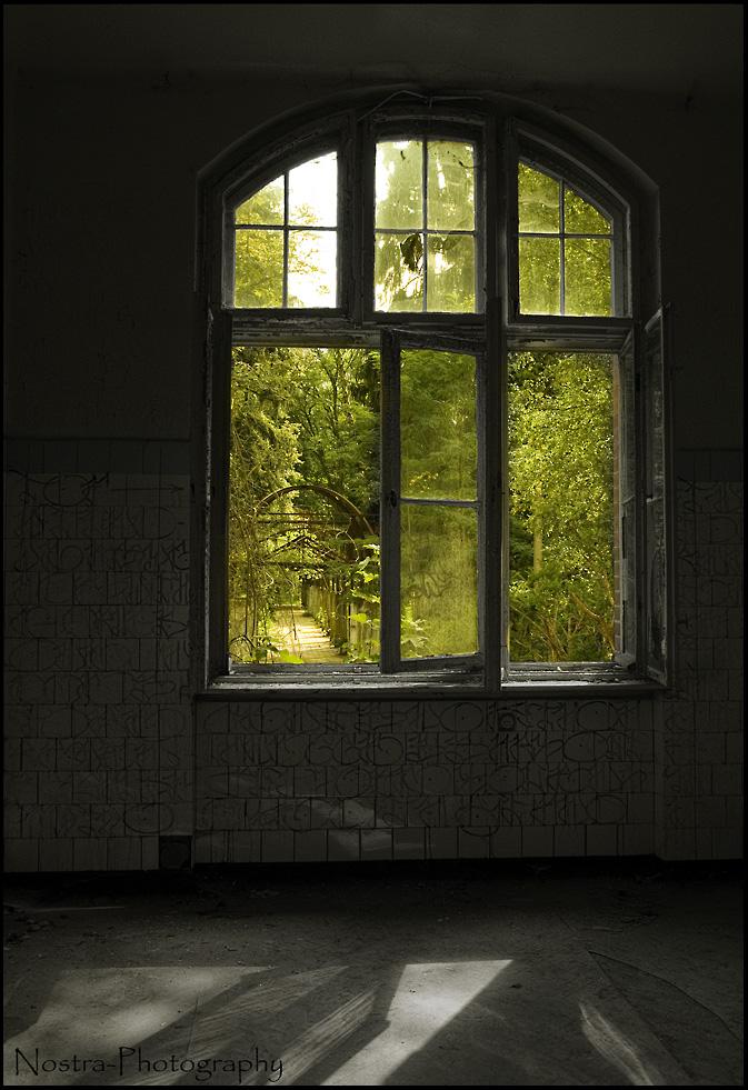 Das Fenster zum Garten