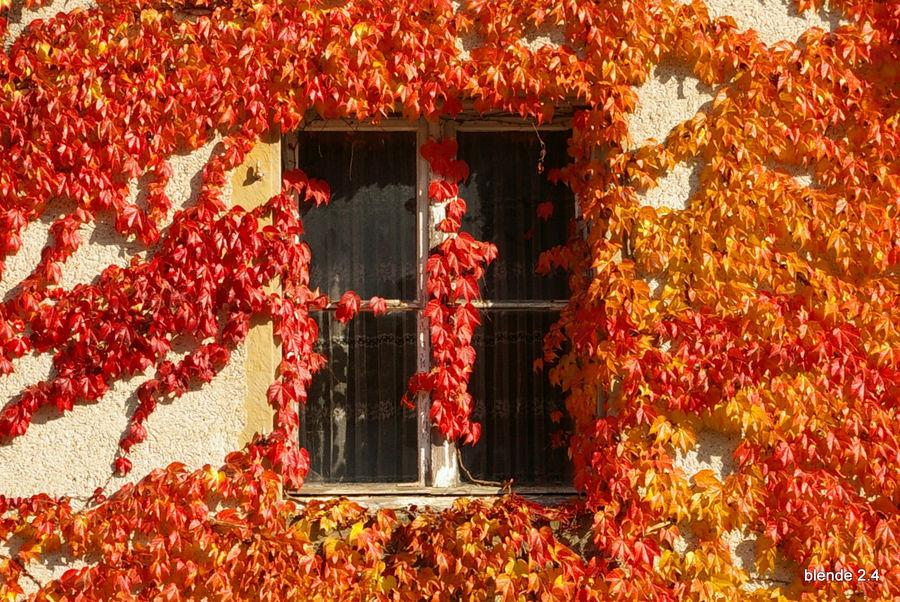Das Fenster zum Herbst