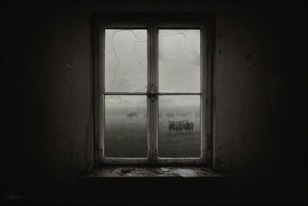 Das fenster zum hof foto bild fotokunst monochrome for Fenster zum hof