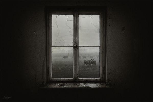 Das Fenster zum Hof…