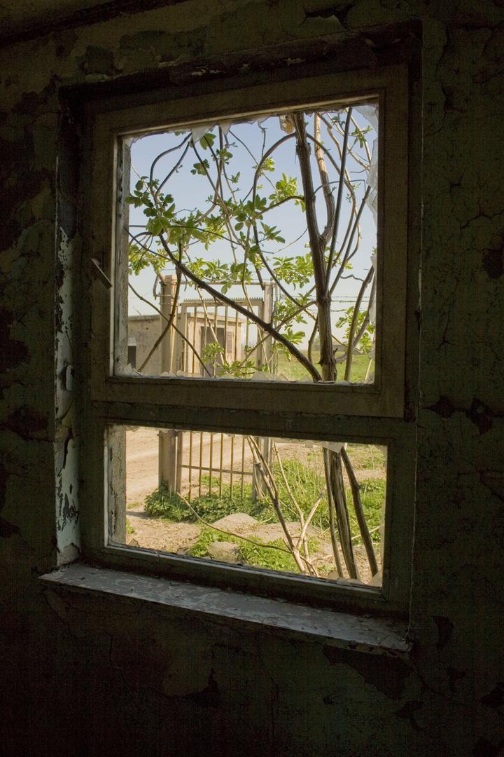 """""""Das Fenster zum Hof"""""""