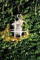 Das Fenster zur Natur ...