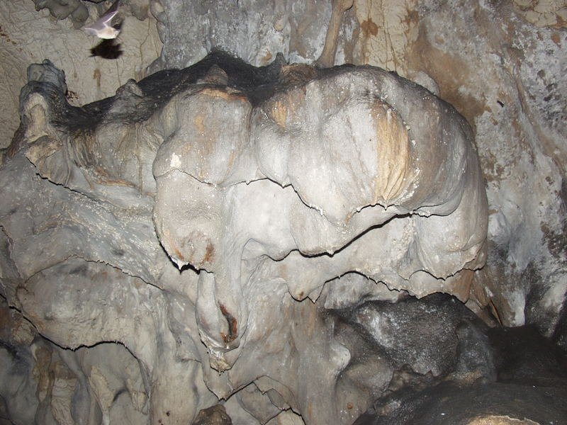 Das Fledertier in der Bärenhöhle