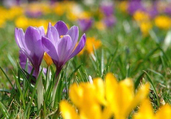 Das Frühjahr kommt...