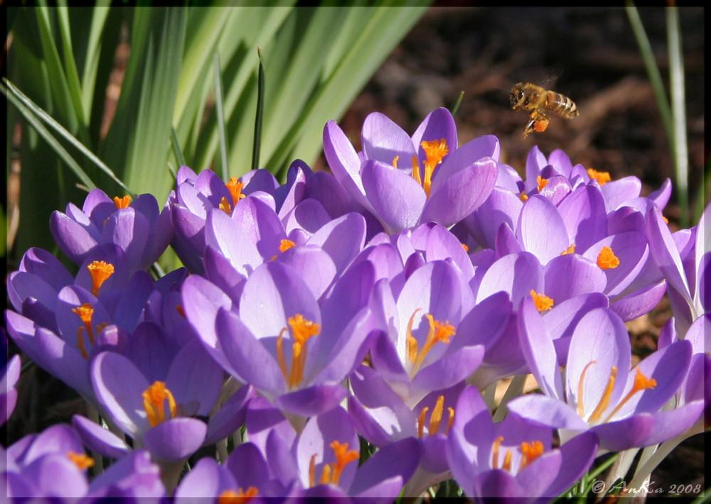 das Frühjahr naht