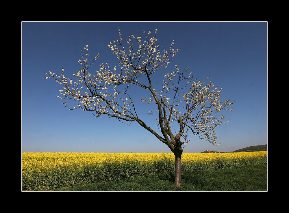 Das Frühlingshachbild