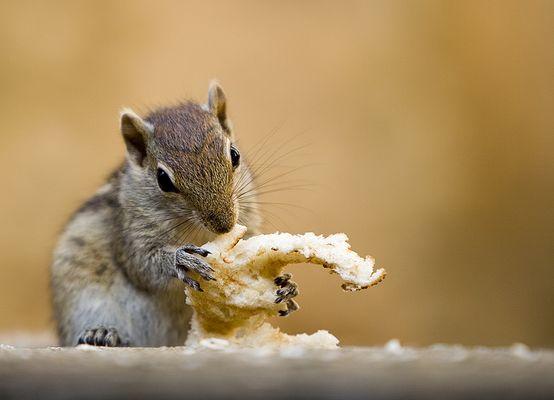 Das Galeriehörnchen...