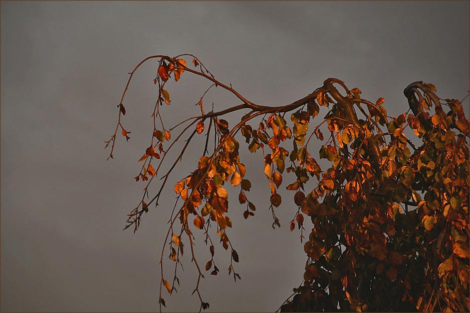 das ganz besondere Licht im Herbst...