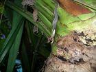 """das Gefecht mit der Slange (6, Ende) """"Costa Rica"""""""